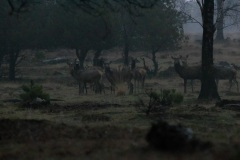 ISO 25600, om 7:41 in het bos in de regen. Zelfs met het blote oog kon ik de herten maar amper zien. Extremer kan bijna niet.