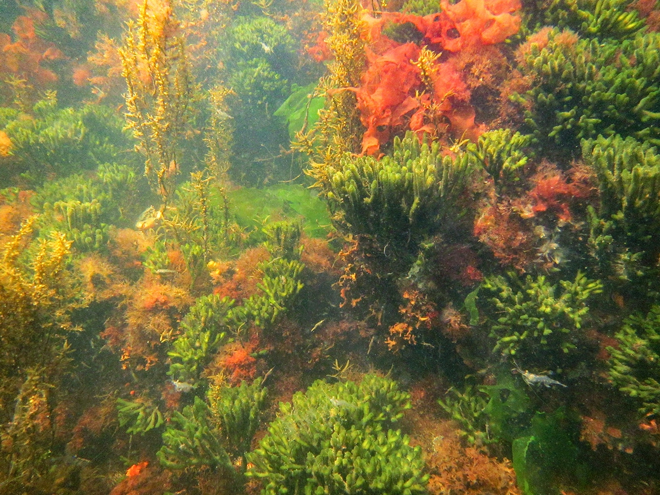 onderwaterwereld van de Grevelingen