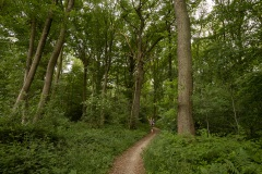 in een heel oud eikenbos