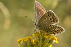 album_vlinders-7