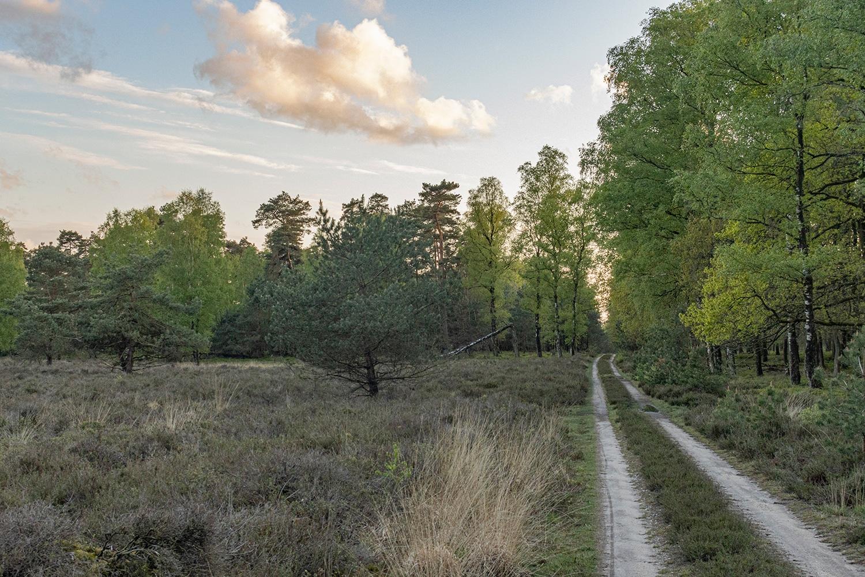 Gemengd bos met heide