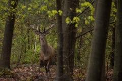 Deze foto maakte ik een uurtje na aankomst, hetzelfde hert als foto no.1
