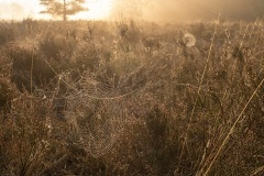 Spinnenweb in het ochtendlicht
