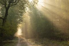 En God zeide: Daar zij licht! en daar werd licht. En God zag het licht, dat het goed was;