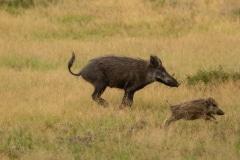 Pumbaa neemt de poten