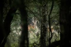 Spitser door de boompjes heen heeft hij ons allang in de gaten.