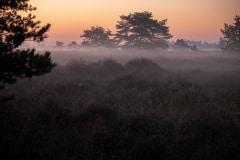 De heide in de vroege ochtend