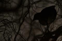 De waterhoentjes sliepen tijdens de strenge vorst in de boom