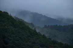 het regenwoud van Wallonië