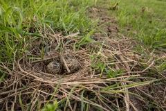 Nog een nest