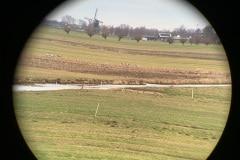 Kraanvogels in het weiland achter ons (genomen door een verrekijker)