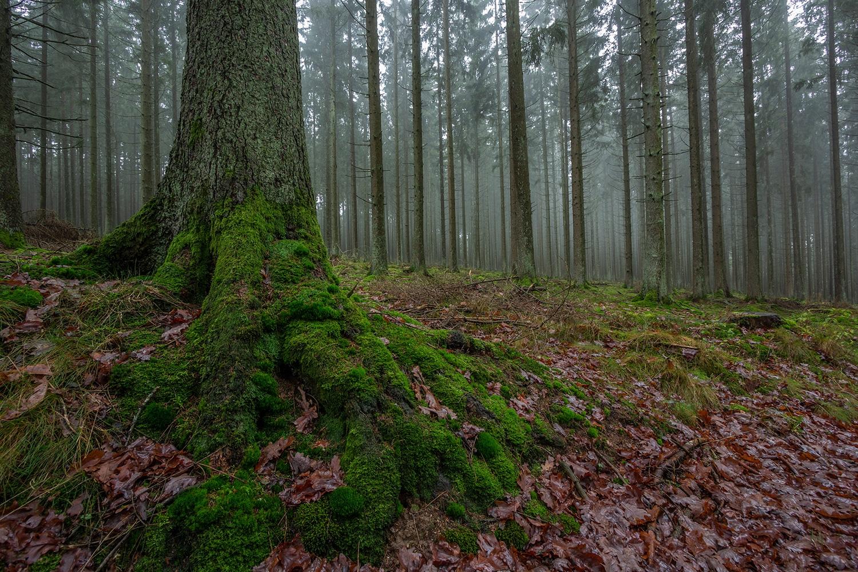 deemstig bos