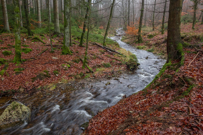 beekloop nabij Saint-Hubert, veel sporen van zwijnen