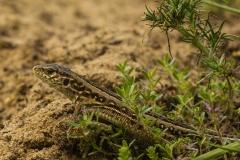 reptielen en amfibieen (1)