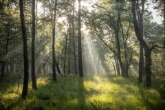 zonneharpen in het mistige bos