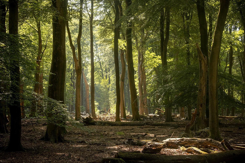 het was zelfs een beetje heiig in het bos