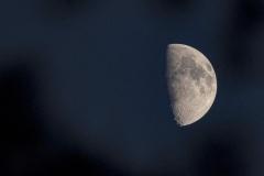 eerste kwartier, de schijngestalte waarop de maan voor de helft verlicht wordt