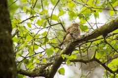 Vogels (4) - Ede