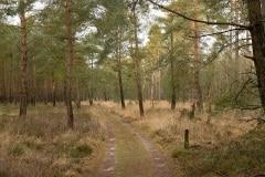 boslandschapje