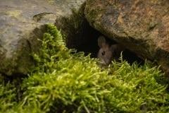 deze huismuis woont bij onze achterdeur