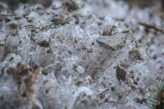 naaldijs, het bevroren grondwater duwt zelfs stenen omhoog