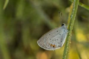 Slapende vlinder met dauw