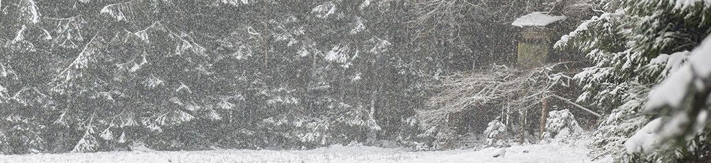 wildzit Ardennen